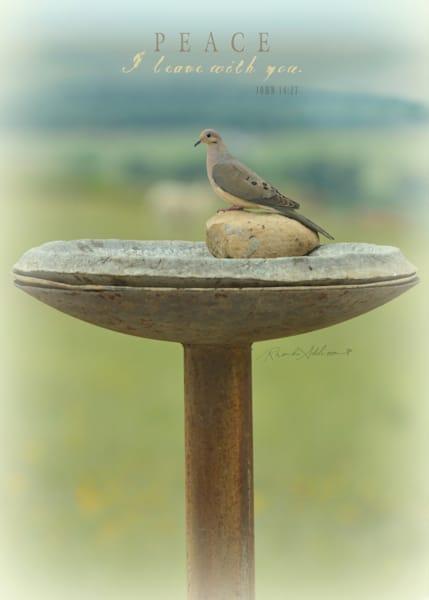 Peace Dove Art