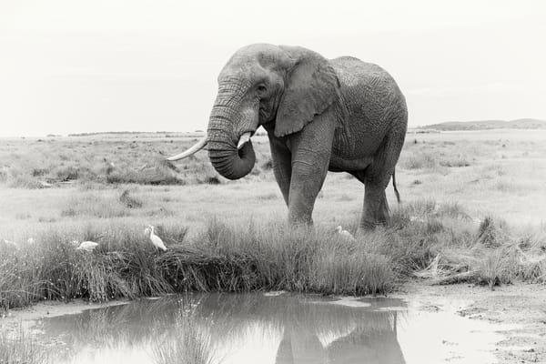 Wonderful wild elephant fine art print