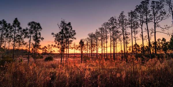 0249 Florida Prairie Art | Cunningham Gallery