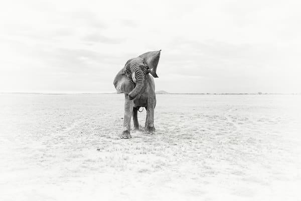 Incredible elephant fine art print