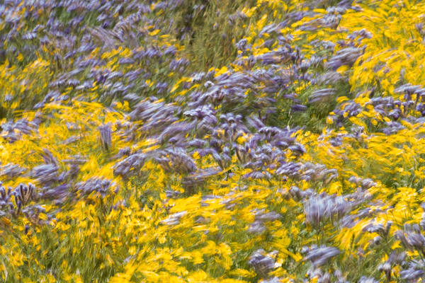 Lovely windswept yellow and purple flowers photo.