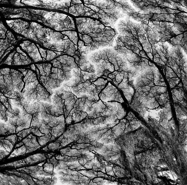 Interesting photo of acacia trees
