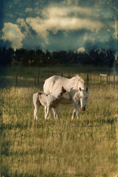 Horses Inseparable