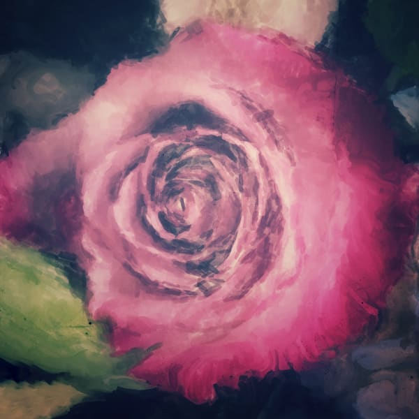Pink Rose Photography Art | Carol's Little World