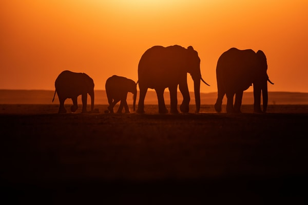 Brilliant sunset with elephants in silhouette