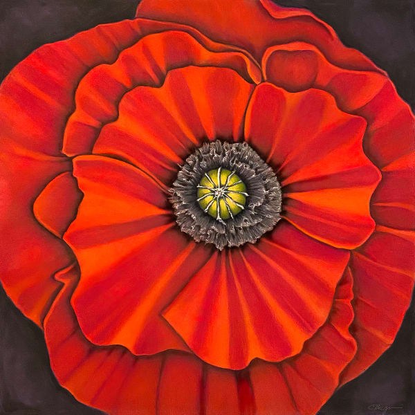 Poppy No. 1, Drawing,  2021 by artist Carolyn A. Beegan