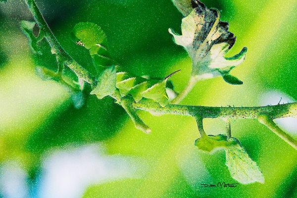 Green Horn Caterpillar