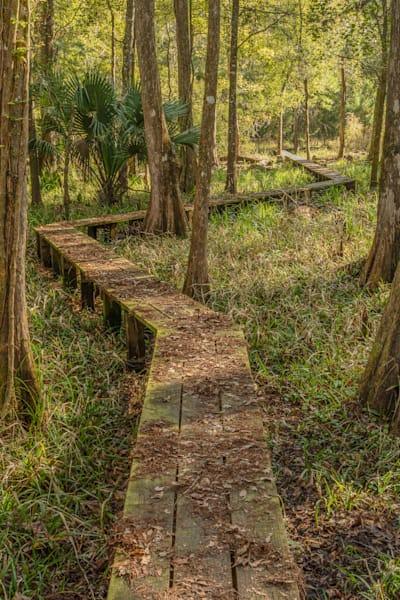 Prairie Creek Boardwalk Photography Art | Visions By Dan McCarthy