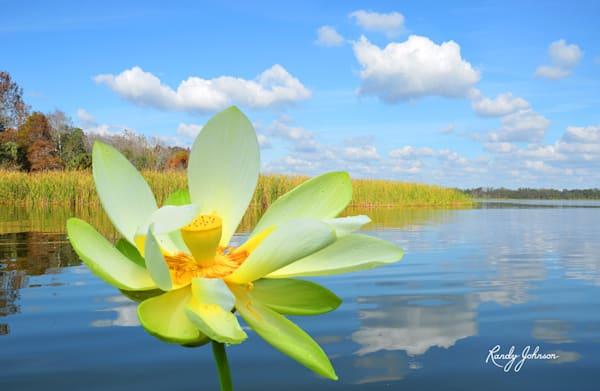 Florida Flora Photography