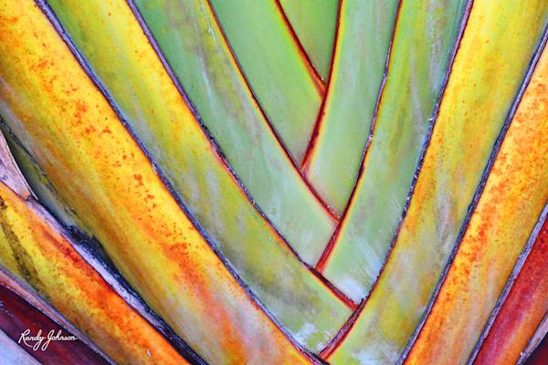 Travelers Palm Art | Randy Johnson Art and Photography