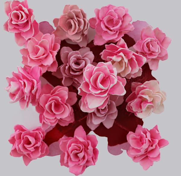 Cb Pink Pop1 Art | Lauren Naomi Fine Art