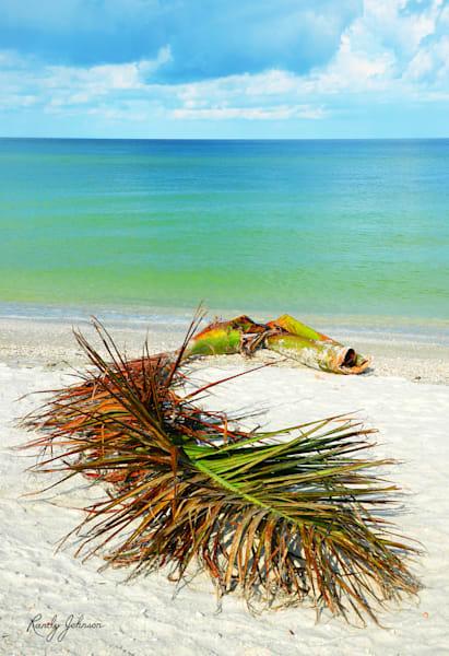 Palm Frond On The Beach Art | Randy Johnson Art and Photography