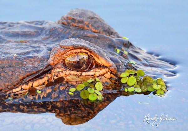 Gator Camo Art   Randy Johnson Art and Photography