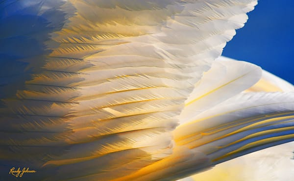 Swan Art | Randy Johnson Art and Photography