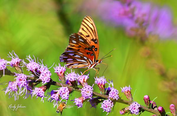 Florida Wildlife Photography