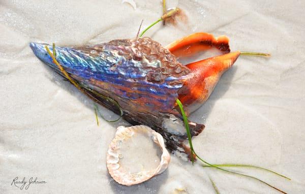 Pearlescence And Orange Art   Randy Johnson Art and Photography