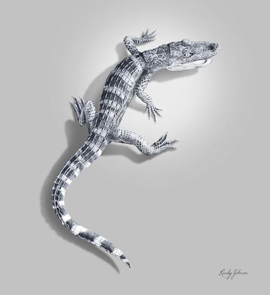 Gator Yearling Art | Randy Johnson Art and Photography