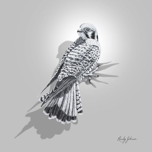 Kestrel Art | Randy Johnson Art and Photography