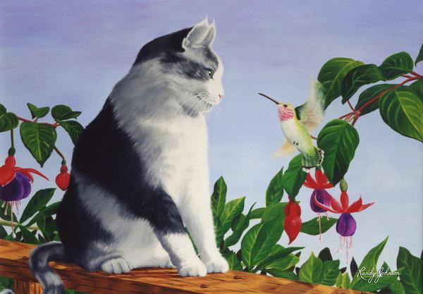 Cat And Hummingbird Art | Randy Johnson Art and Photography
