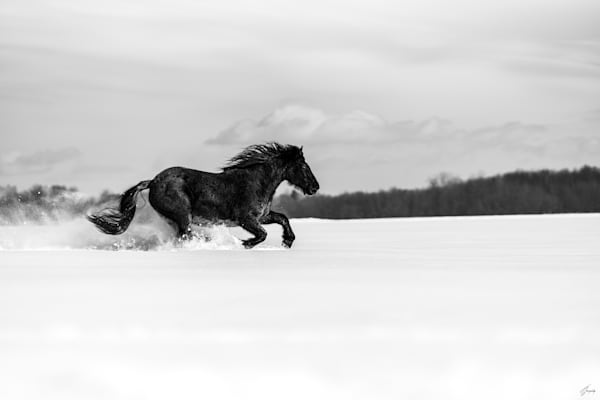 Perfection - from the Limited Edition Collection : Legend of Freedom told by horses - A Fine Art Photography by T-Gonzalez