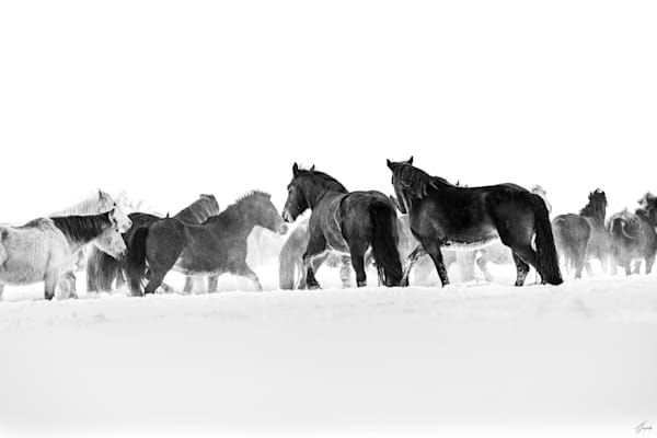Blizzard - Legend of Freedom Told by Horses. A Fine Art Photography Limited Edition Collection by T-Gonzalez