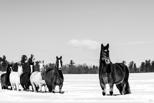 The Brave One - The Legend of Freedom told by horses - A Fine Art Photography Collection by T-Gonzalez