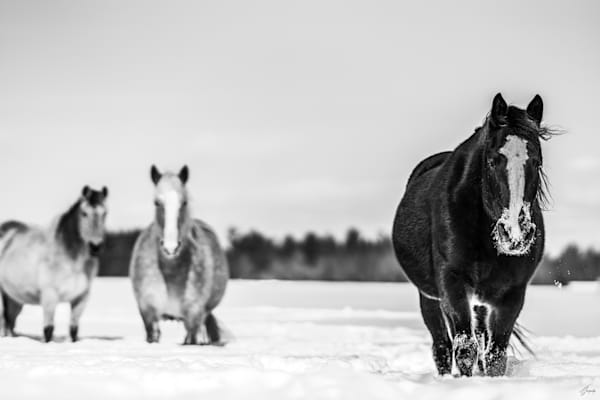 Trust - Legend of Freedom told by horses - Fine Art Photography Collection by T-Gonzalez