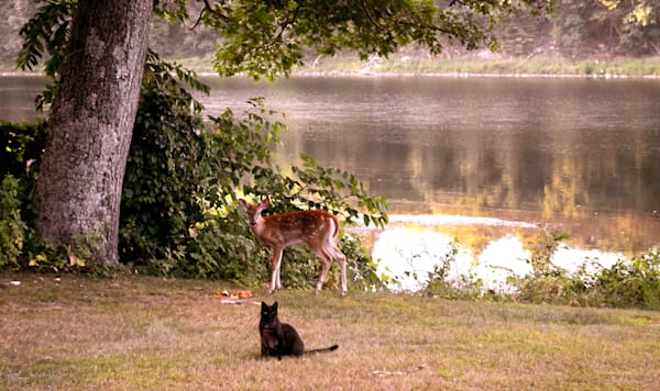 River View of Squeeky Cat and Baby Spotted Deer