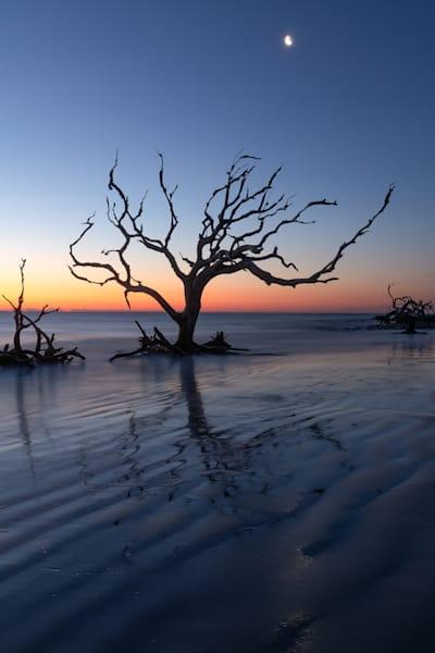 Driftwood Beach Tree Silloughette At Sunrise Print