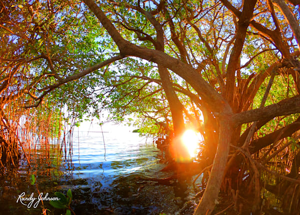 Mangrove Sunset Lattice Art | Randy Johnson Art and Photography