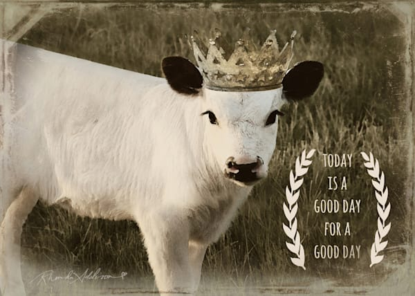 Today is a Good Day Calf