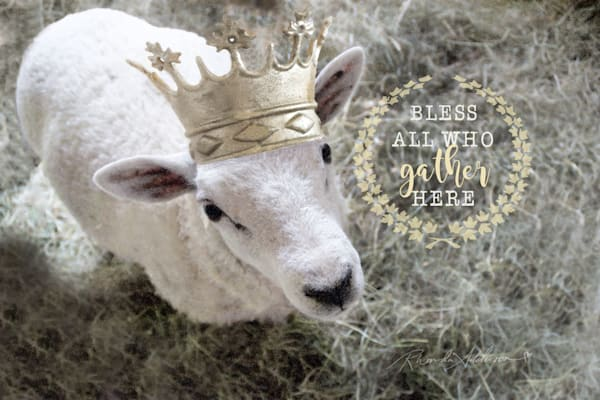 CROWNED SHEEP Gather