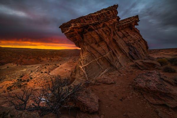Desert Sinew Photography Art | Garsha18 Fine Art Photography