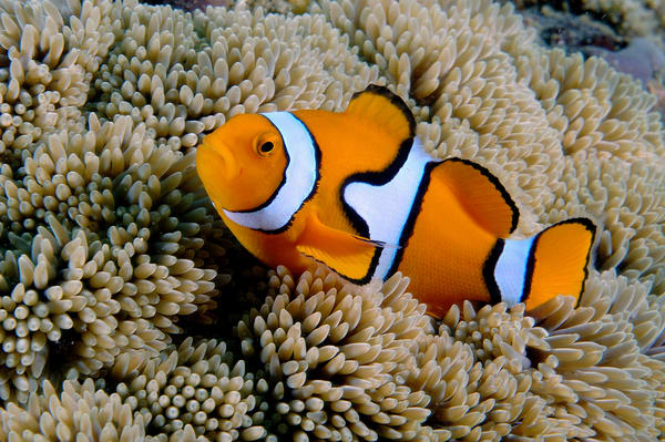 "Fantastic real life ""Nemo"" photo"