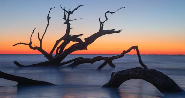Driftwood Rises From the Surf like a Serpent Print