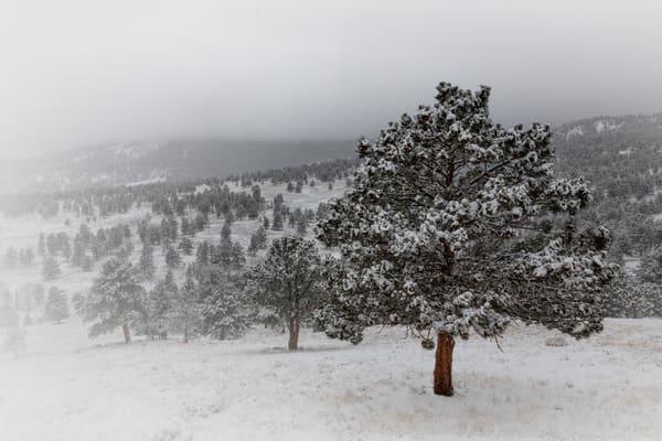 Snowy Day At Rocky Mountain National Park 4701 Art | Koral Martin Fine Art Photography