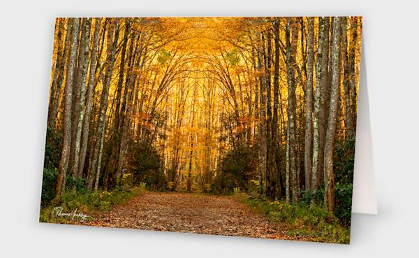 Forest Symmetry Photography Art | Thomas Yackley Fine Art Photography