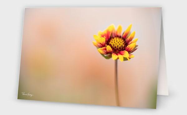 Single Blanket Photography Art | Thomas Yackley Fine Art Photography