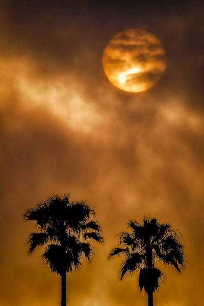 Sunrise Palms Photography Art | Garsha18 Fine Art Photography