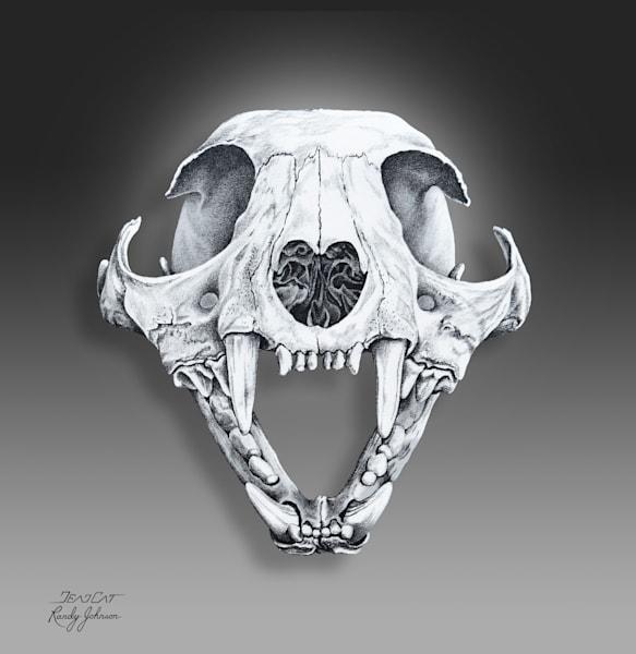 Lynx Rufus (Bobcat) Skull Art | Randy Johnson Art and Photography