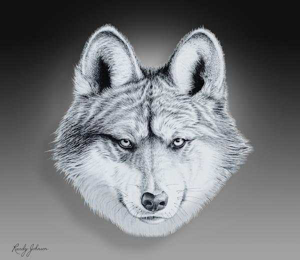 El Lobo Mexican Gray Wolf Art | Randy Johnson Art and Photography