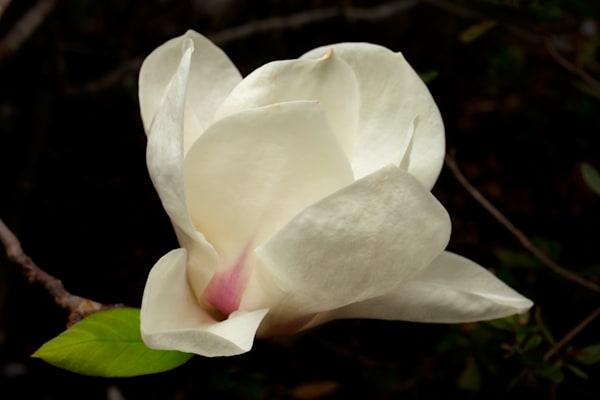 Magnolia Photography Art | Rick Gardner Photography