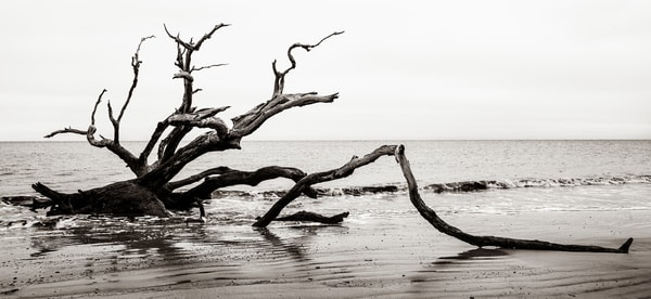 Driftwood Beach skeleton - Jekyll Island fine-art photography prints