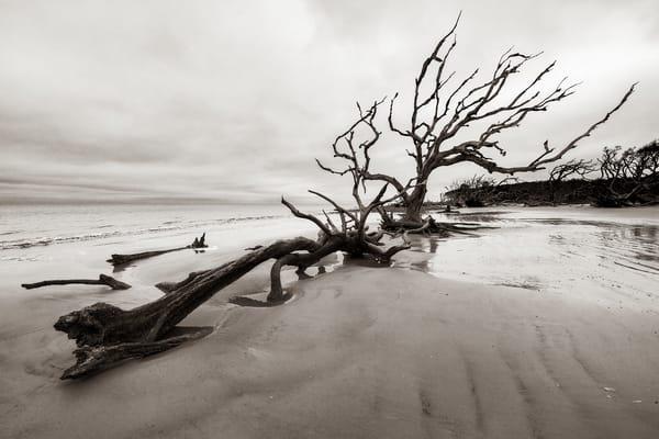 Jekyll Island Boneyard - Driftwood Beach fine-art photography prints