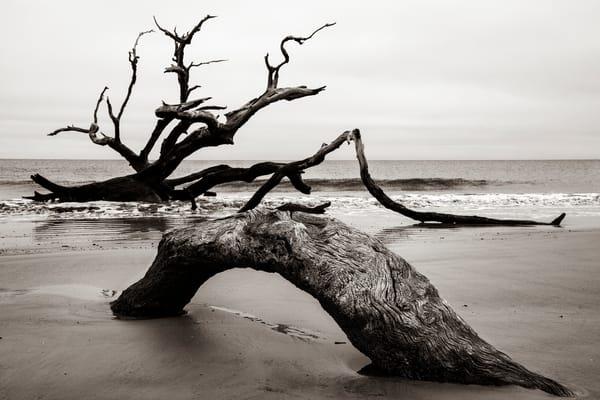 Driftwood Beach Sea Monster - Jekyll Island fine-art photography prints