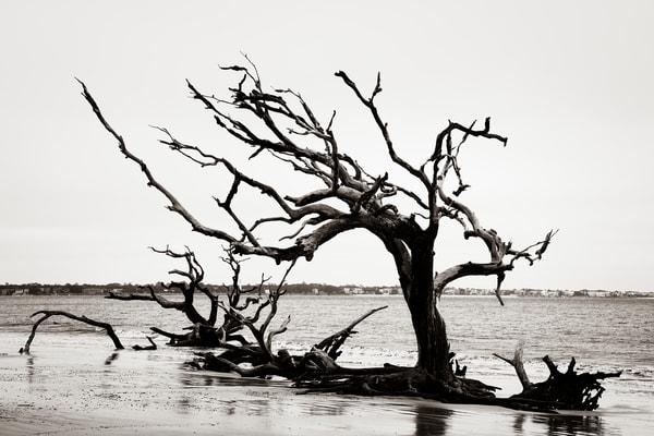 Still Standing - Driftwood Beach fine-art photography prints