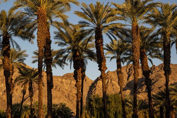 La Quinta Palms Ii Photography Art | Jim Grossman Photography