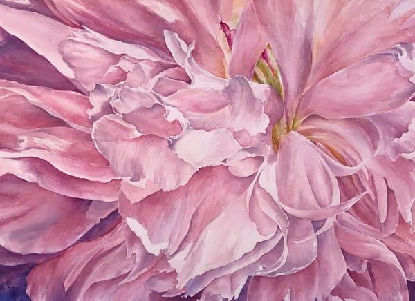 Pink Peony Art | ebaumeistermcintyre