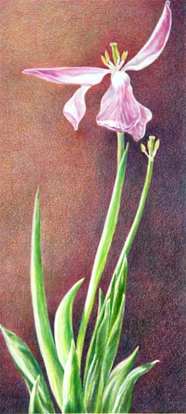 Tulip Angel Art | ebaumeistermcintyre
