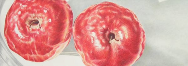 Red Apples Art   ebaumeistermcintyre